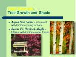light example tree growth and shade