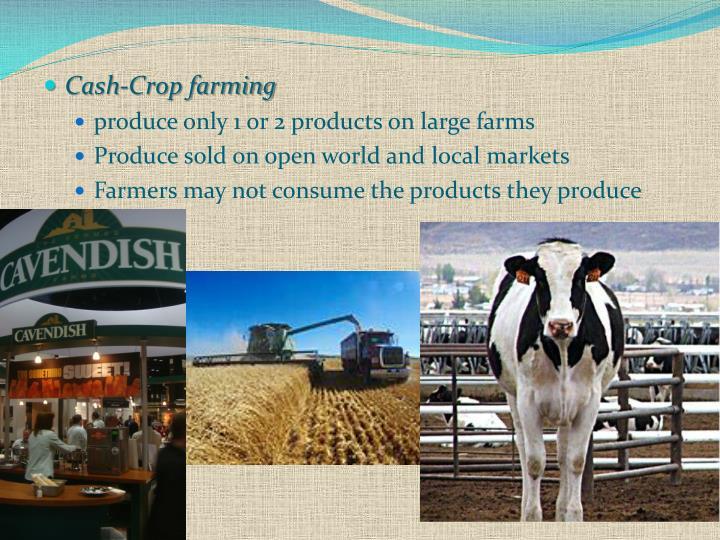 Cash-Crop farming
