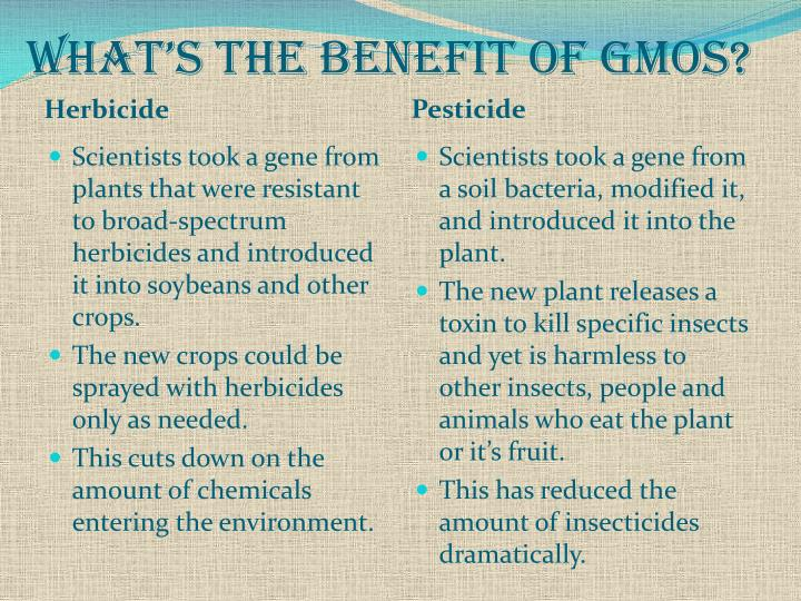 What's the Benefit of GMOs?