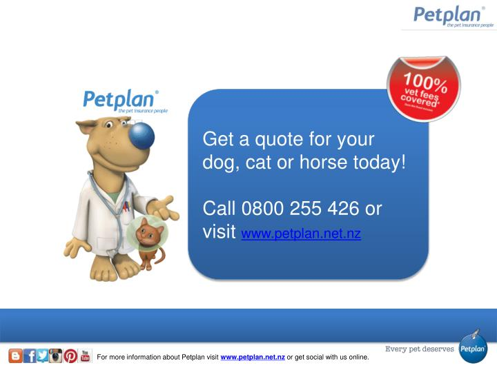 Get a quote for your dog, cat or horse today!