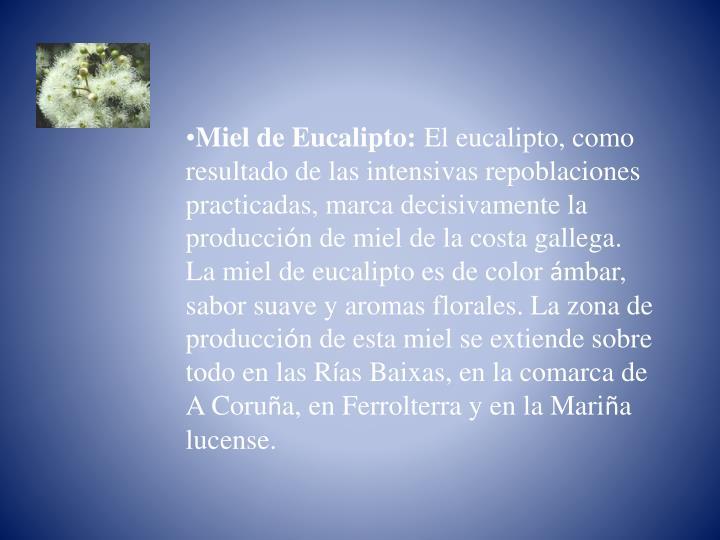 Miel de Eucalipto: