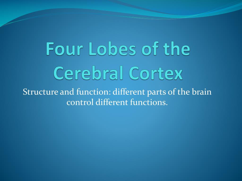Ppt Four Lobes Of The Cerebral Cortex Powerpoint Presentation Id