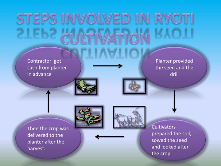 STEPS INVOLVED IN RYOTI CULTIVATION