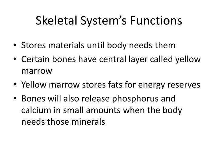 Skeletal System's Functions