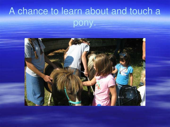 A chance to learn about and touch a pony.