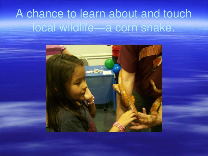 A chance to learn about and touch local wildlife—a corn snake.