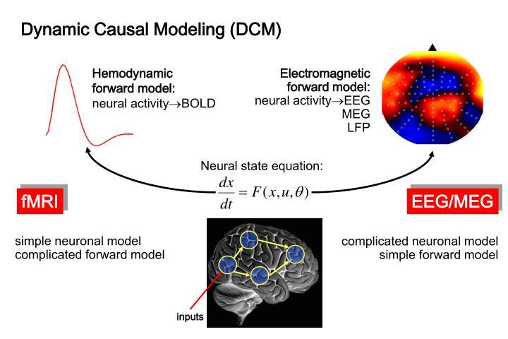 Dynamic Causal Modeling (DCM)