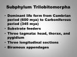 subphylum trilobitomorpha