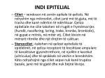 indi epitelial10