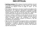 indi epitelial4