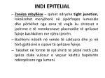 indi epitelial5