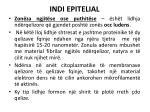 indi epitelial6