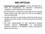 indi epitelial7