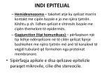 indi epitelial8