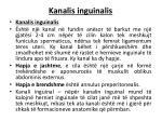 kanalis inguinalis
