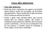 linea alba abdominis