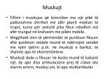 muskujt11