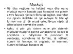 muskujt8