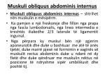 muskuli obliquus abdominis internus