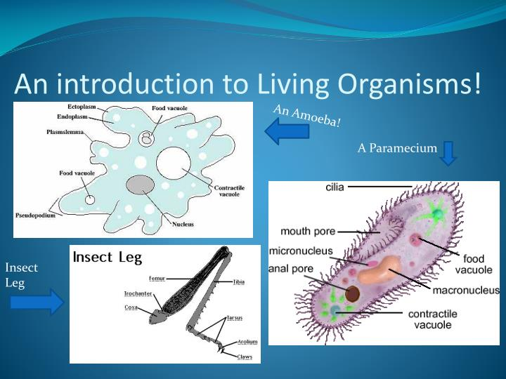 An introduction to living organisms