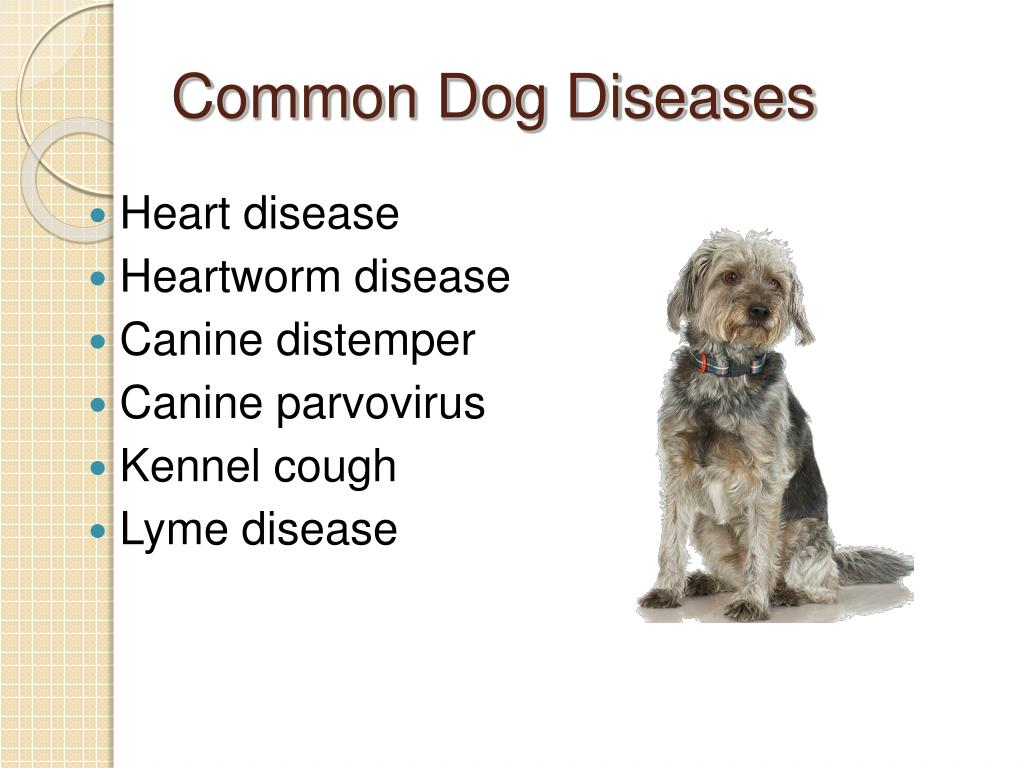 PPT - Common Diseases of Small Animals PowerPoint ...