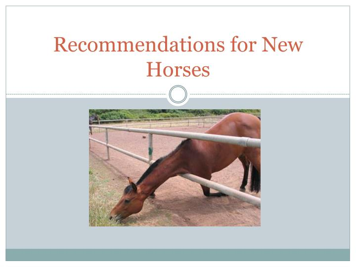 Recommendations for New Horses
