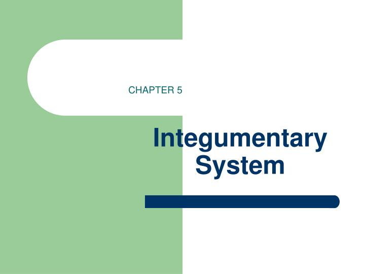 integumentary system lesson plan 28a a&p: integumentary system lesson plan learning outcomes program level: lay groundwork to integrate an understanding of the integumentary system into the art and science of massage course level: understand how this system is similar to and different from the others we study.