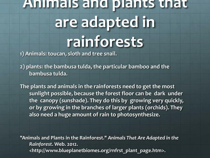 Animals and plants that are adapted in rainforests