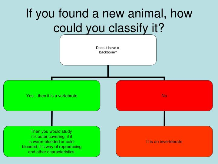PPT - Classification PowerPoint Presentation - ID:2396699