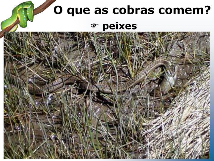 O que as cobras comem?