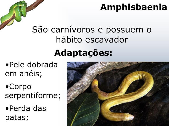 Amphisbaenia