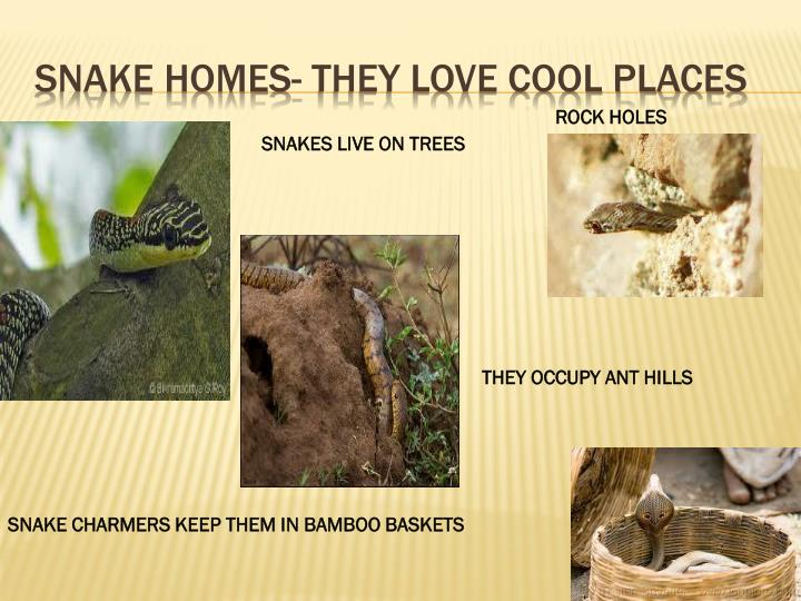 SNAKE HOMES- THEY LOVE COOL PLACES