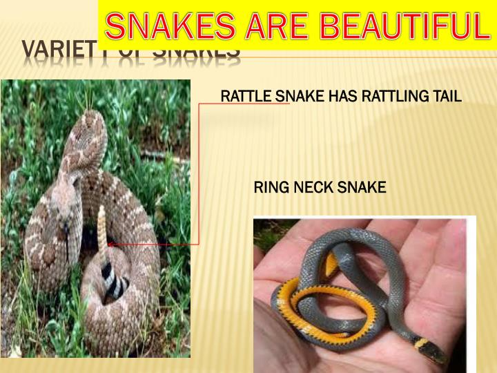 SNAKES ARE BEAUTIFUL