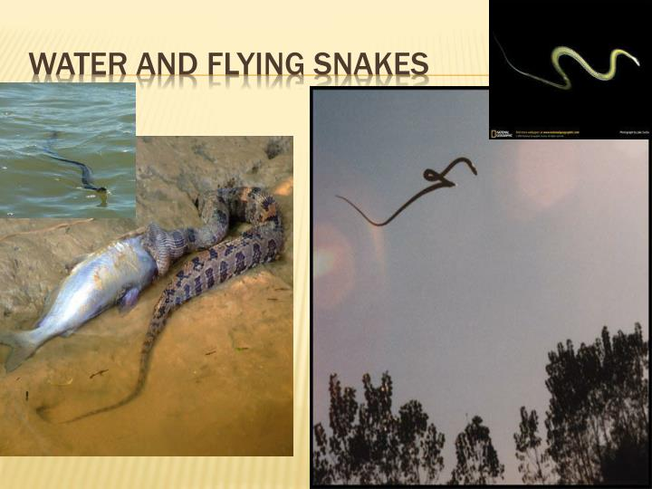 WATER AND FLYING SNAKES
