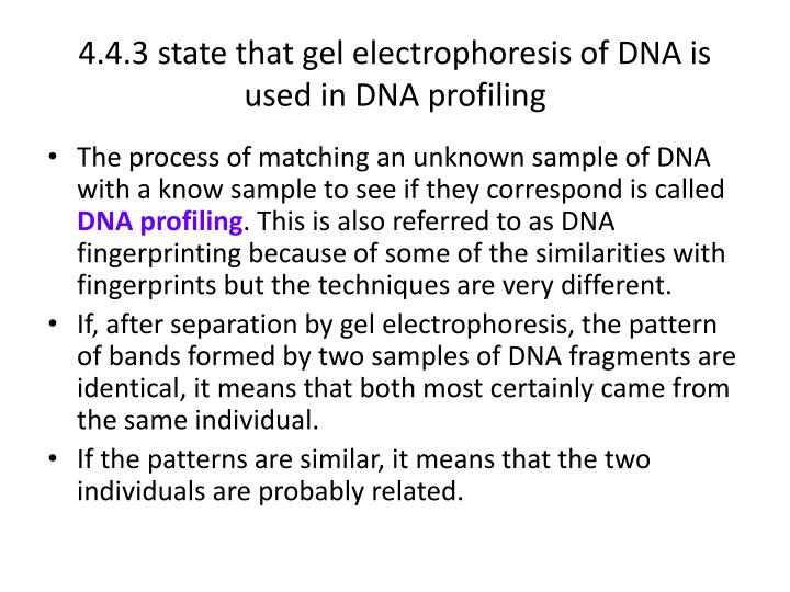 4.4.3 state that gel electrophoresis of DNA is used in DNA profiling