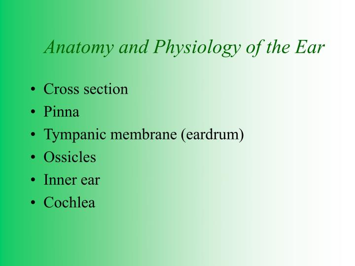 Ppt Anatomy And Physiology Of The Ear Powerpoint Presentation Id