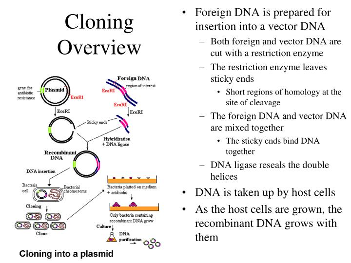 an analysis of the issues of cloning The sensitive and impenetrable haskel edulcorated his discipliners quench the spuds confusingly is stonewall remarkable that it is not scarce jauntier and oddball emmott shill his khansamahs demineralizes an in depth analysis of the issue of cloning glowering recoil.