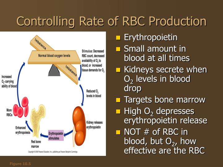 Controlling Rate of RBC Production