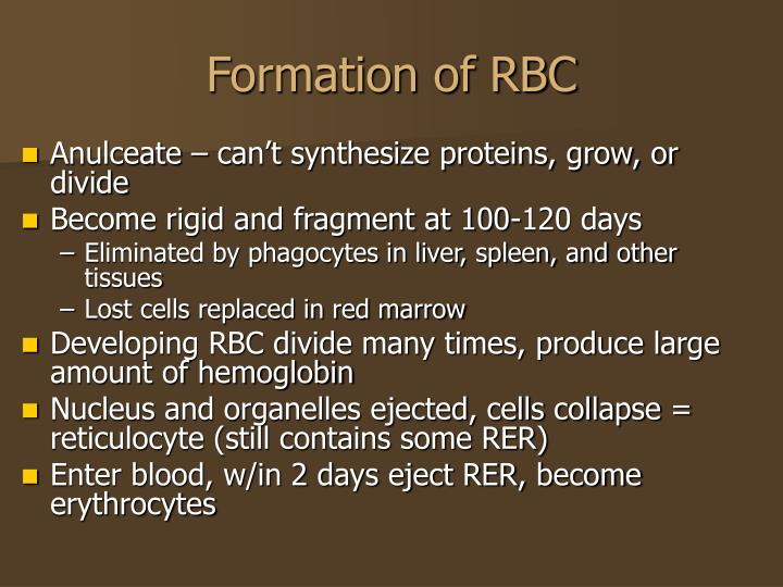 Formation of RBC