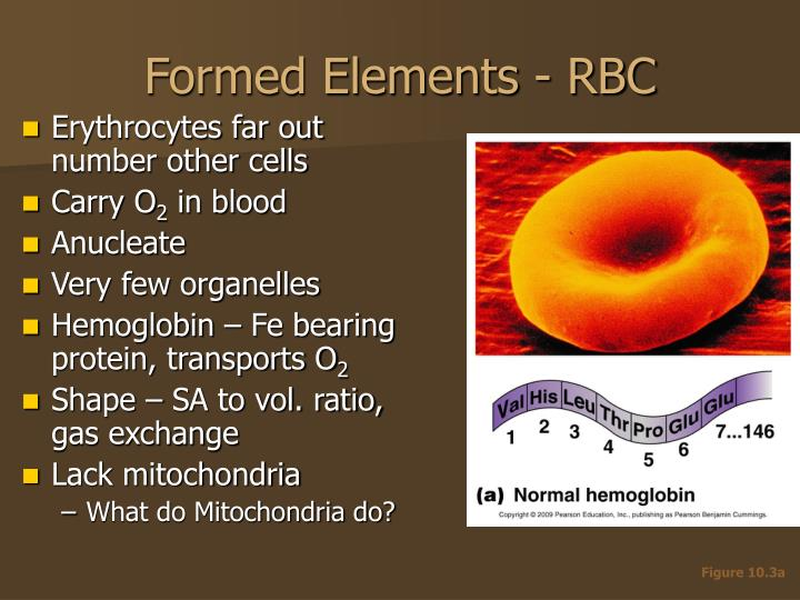 Formed Elements - RBC