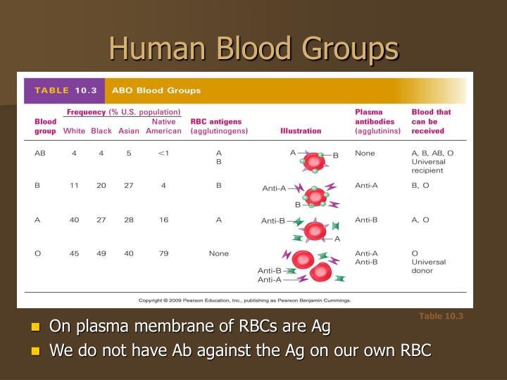 Human Blood Groups