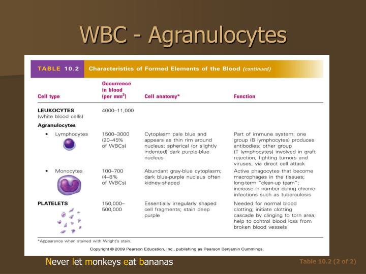 WBC - Agranulocytes