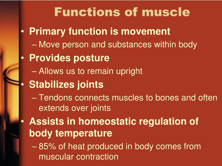 Functions of muscle