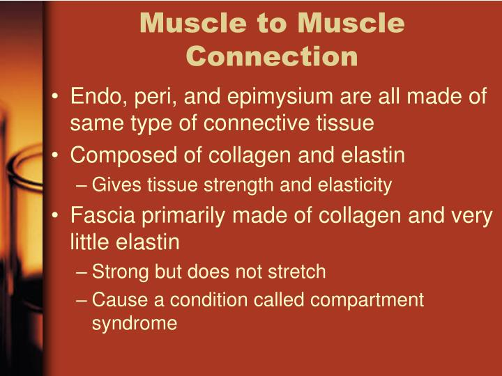 Muscle to Muscle Connection