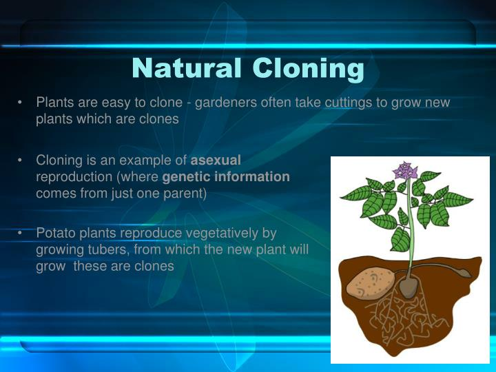 the permissable nature of cloning illustrated in In this lesson, students act as research scientists and investigate the development of animal and human cloning they then report their findings, both orally and visually, to their 'colleagues' at a symposium on cloning research.