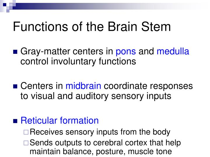 Functions of the Brain Stem
