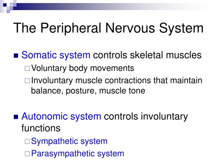 The Peripheral Nervous System