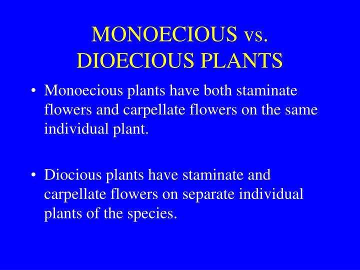 Monoecious vs dioecious plants