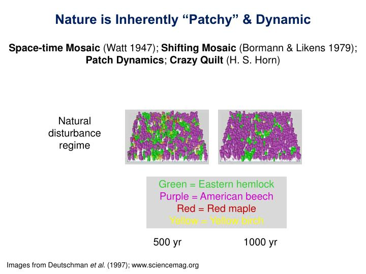 """Nature is Inherently """"Patchy"""" & Dynamic"""