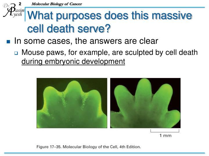 What purposes does this massive cell death serve?
